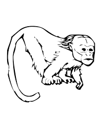 emperor tamarin coloring page tamarind monkey colouring pages