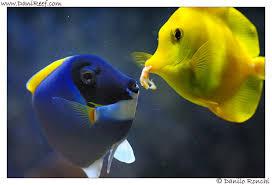 pesci alimentazione alimentazione dei pesci the fish feeding danireef portale