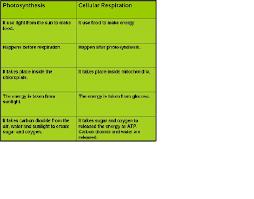 Photosynthesis And Cellular Respiration Worksheet How Do The Equations Of Photosynthesis And Cellular Respiration