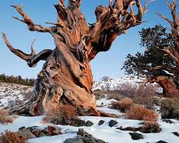 62 best my top ten trees images on landscapes nature