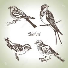 two birds on a branch drawing google search tattoos