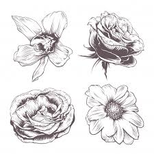 hand drawn vectors photos and psd files free download