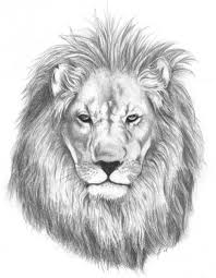 realistic lion cliparts clip art library