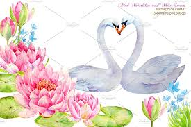 swan wedding wedding clipart waterlily and swans illustrations creative market