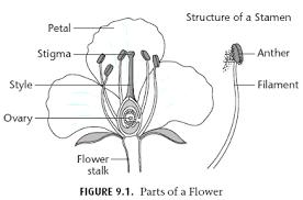 mrwatsonscience wild prairie rose