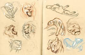 lion sketches u2013 estrella vega