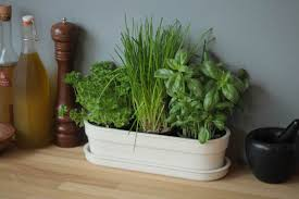 Indoor Herb Planters by Window Sill Decoration Indoor Planters Herb Garden Or Containers