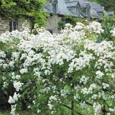 23 best flowers for the garden images on pinterest flowers