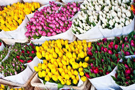 detail of amsterdam flowers market the best tulips of the world