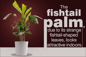 indoor palm indoor palm plants