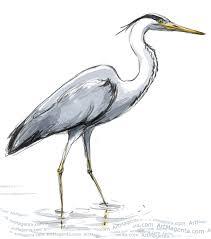 birds herons