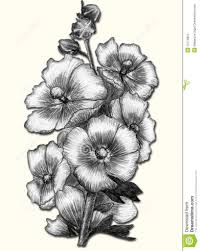 beautiful pencil drawings of flowers beautiful flower sketches in
