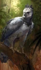 39 best harpy eagle images on pinterest harpy eagle birds of