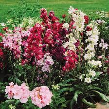 4681 best gorgeous garden plants images on pinterest gardening