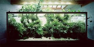 fish tank meets zen rock garden meets bonsai takashi amano u0027s