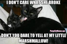 Overprotective Mom Meme - this cat mommy is overprotective funny cat meme