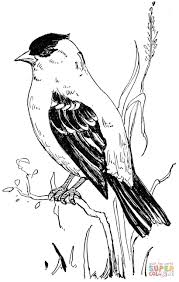 american goldfinch coloring page supercoloring com coloring