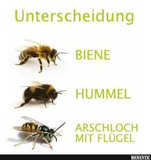 bienen sprüche 125 best biene images on bees knees honey and mini quilts