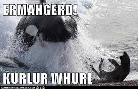 Ermahgerd Animal Memes - i can has cheezburger berks funny internet cats cat memes and