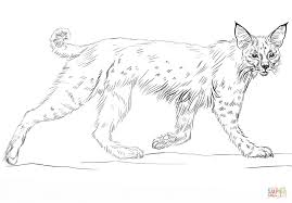 running bobcat coloring page free printable coloring pages