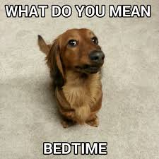 Dachshund Meme - what do you mean bedtime dachshund meme source lalaween on