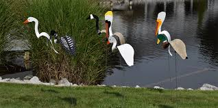 Florida Backyard Birds - florida dancing birds
