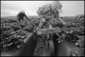thousands of farmworkers can u0027t make a living community alliance