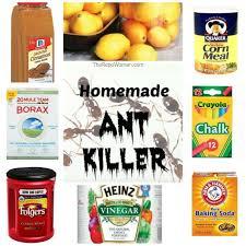 Home Tricks Best 25 Ant Remedies Ideas On Pinterest Natural Bug Killer