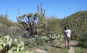 Arizona scenery images Arizona scenery my photos of arizona desert cactus and scenery jpg