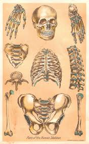 free vintage halloween printables 19 best print images on pinterest vintage medical creepy