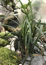 plante verte dans une chambre 50 génial plante interieur pour plante verte pour chambre graphisme
