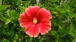 free images nature flower petal floral orange