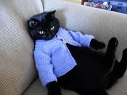 sweaters for cats 20 cats wearing adorable sweaters