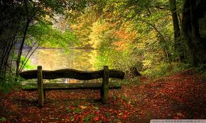 Park Bench Scene Empty Bench In Fall Scene 4k Hd Desktop Wallpaper For 4k Ultra