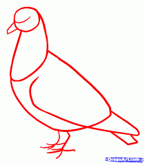 how to draw pigeons step by step birds animals free online