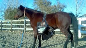 Horse Saddle by Endurance Horse Training Basics Saddle Slipping Karen U0027s Musings
