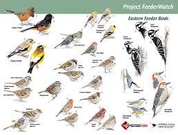 indiana backyard feeder birds bird feeding websites and here