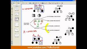 pedigree analysis youtube