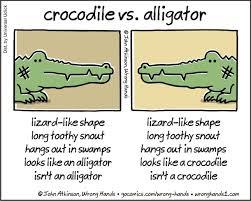 Alligator Memes - crocodile vs alligator meme guy