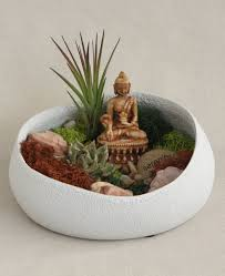 buddha u0027s garden moss and air plant terrarium