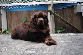 there are bears in my backyard blogathon 5 mybrownnewfies com