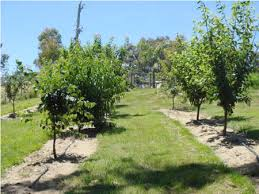 Planting Fruit Trees In Backyard Backyard Orchard