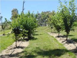 Backyard Orchard - Backyard orchard design