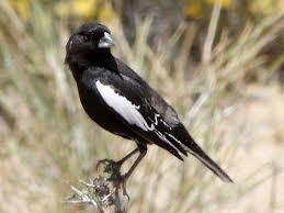 Colorado Birds images Colorado birds pictures and bird identification tips jpg