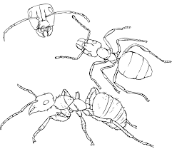 ant farm coloring pages paginone biz