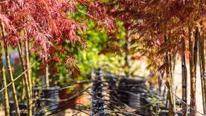 ask an arborist how do i choose a nursery tree arbor day