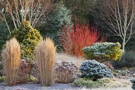 border at the winter garden bressingham gardens norfolk uk