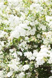 may bush burke u0027s backyard