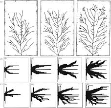 the constructal law of design and evolution in nature