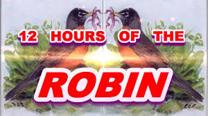 the robin sound effect robin bird whistling for 12 hours